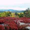 Coastal Autumn Colors by Gene Cyr