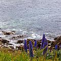 Coastal Cliff Flowers by Melinda Ledsome