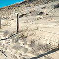 Coastal Dunes In Holland 3 by Jenny Rainbow