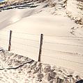 Coastal Dunes In Holland by Jenny Rainbow
