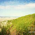 Coastal Dunes by Sylvia Cook