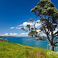 Coastal Farmland Landscape With Pohutukawa Tree by Stephan Pietzko