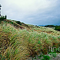 Coastal Flora, Oregon by Tim Holt