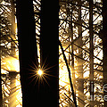Coastal Forest by Art Wolfe