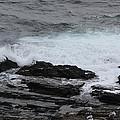 Coastal Maine 2 by Susan Feeley