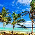 Coastal Palm Trees by Jess Kraft