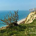 Coastal Path - West Bay To Eype  by Susie Peek