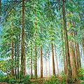 Coastal Redwoods by Jane Girardot
