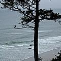 Coastal Tree by Brad Gravelle