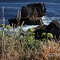 Coastal View From Cascais  by Darleen Stry