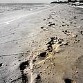 Coastal Walks by Laurie Pike