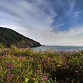 Coastal Wildflowers Of Oregon by Debra and Dave Vanderlaan