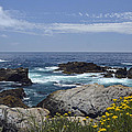 Coastline And Flowers In California's Point Lobos State Natural Reserve by Bruce Gourley
