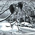 Coat Of Ice - Winter In New York by Miriam Danar