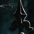 Cobwebs by Margie Hurwich