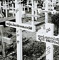 Cochin Cemetery  by Shaun Higson