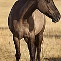 Cochise by Jack Milchanowski