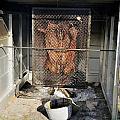 Cochon De Lait -roasting by Bradford Martin