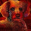 Cockapoo Dog by Marlene Watson