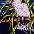 Cockatoo by Dawn Siegler