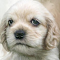 Cocker Pup Portrait by Carol Cavalaris
