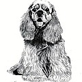 Cocker Spaniel Puppy by Merri aka Cathy Friesenhahn