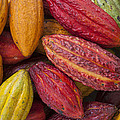 Cocoa Fruits Brazil by Ingo Arndt