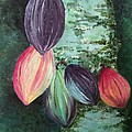 Cocoa Pods by Karin  Dawn Kelshall- Best