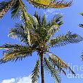 Cocoanut Palm Trees Sky Background by Lee Serenethos