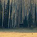 Coconino National Forest by Jeri lyn Chevalier