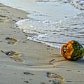 Coconut On The Sand by Viktor Birkus