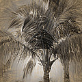 Coconut Palm Tree by Peter Hogg