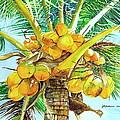Coconut Series II by Jelly Starnes