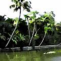 Coconut Trees And Others Plants In A Creek by Ashish Agarwal