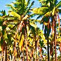 Coconut Trees by Joe Carini