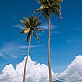 Coconut Trees by Kim Pin Tan