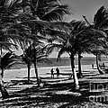 Coconut Trees On A Typical Bahia Beach by Carlos Alkmin