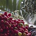 Cocos Nucifera - Niu Mikihilina - Palma - Niu - Arecaceae -  Palmae by Sharon Mau