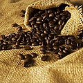 Coffee Beans by FL collection