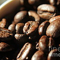 Coffee Beans by Kenny Glotfelty