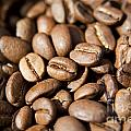 Coffee Beans by Tim Hester