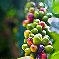 Coffee Beans by Viola Jasko