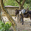Coffee Country Dominican Republic by John Lee Montgomery III
