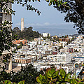 Coit Tower View by Kate Brown