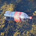 Coke Among The Seaweed by Caroline Stella