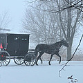 Cold Amish Morning by David Arment