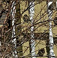Cold Birds by Joseph Yarbrough