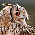 Cold Breathe _ Eagle Owl in the Winter by Roeselien Raimond