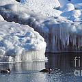 Cold Ducks  by Eva Kato