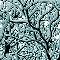 Cold Frosted Limbs Above by Michael Eingle
